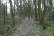 Widmore Wood