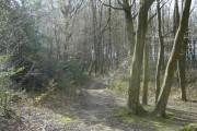 Widmore Wood, Hemel Hempstead
