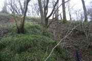 Woodland on climb to Nobleston Wood
