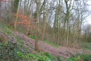 Woodland near Wistaston Brook