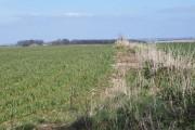 Arable fields off Howgare Road, Broadchalke