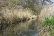 River Pant