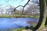 Pond West of Woodside Farm