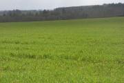 Farmland, Rousham
