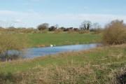River Derwent near Breighton