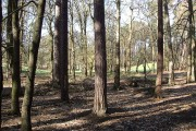 Looking through the woods to Kiln Ground