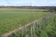 Footpath south of Hattingley