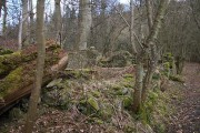 Ruin in Kinnoull Woods