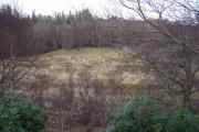Woodland near Leacnasaide