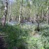 Eggerslack Woods Bluebells