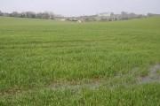 Soggy farmland near Cole Henley