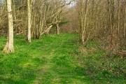Butlett's Wood
