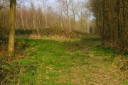 Hawkhurst Common Wood