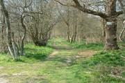 Cutlers Wood