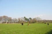 Farmland at Treborth Uchaf Farm