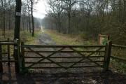 Chaddesley Wood