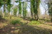 In Limekiln Wood
