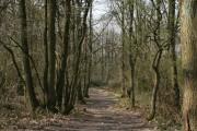 North Pepper Wood