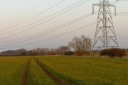 Farmland, Buckland Marsh