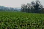 Farmland next the M1