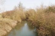 New River Ray at Oddington