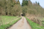 Entering Elhampark Woods
