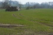 Farmland, Duxford