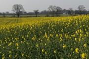 Farmland, Hatford