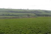 Farmland, Raggetsyke
