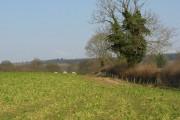 Turnip field, Croft