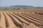 Potato field, Milton House