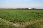 Claypole Fen, Lincolnshire