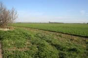 Farmland near Fenton