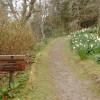 Lochalsh Woodland Garden Path