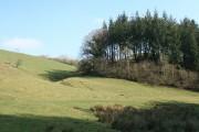 Molland: edge of Zeal Wood