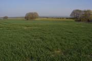 Farmland, Manningford Bohune