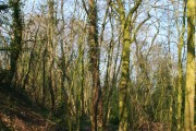 Woodland by embankment