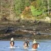 Horses in Armadale Bay