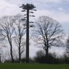 Phone mast disguised as a tree
