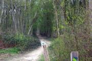 Dering Wood - waymarked path