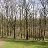 Wood pasture off Brier Lane, Southowram