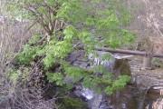 Afon Lwyd