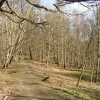 The path through Cromwell Wood, Southowram (2)