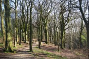 Broad Hey Wood Ramsbottom