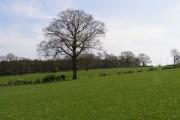Edge of Melkinthorpe Wood