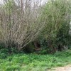 """Into the Bushes"", footpath near Alveley, Shropshire"