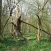 Footpath to Bowhills Dingle, Shropshire