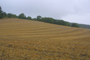 Arable field after harvesting