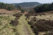 Hednesford Hills