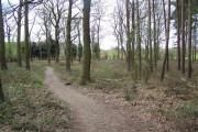 Pipe Hill Woodland Walk